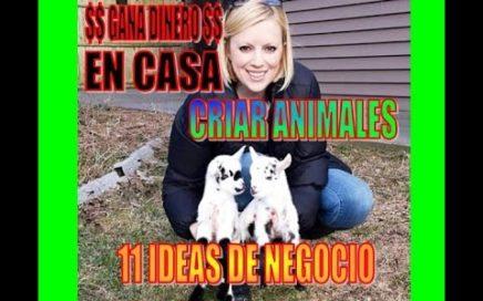 CRIA DE ANIMALES, 11 IDEAS DE NEGOCIO. GANA DINERO $$